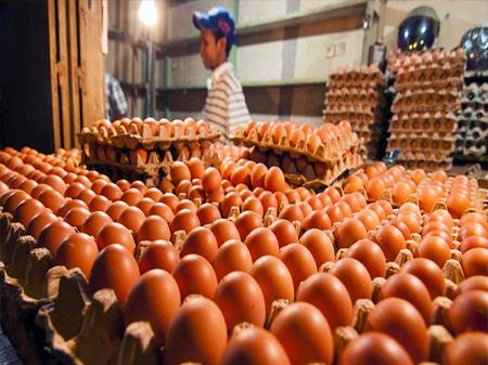 Sentra Produsen Telur