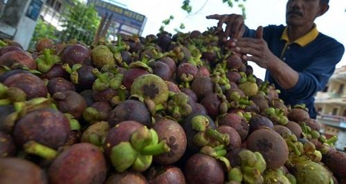 Sentra Produksi Manggis di Indonesia